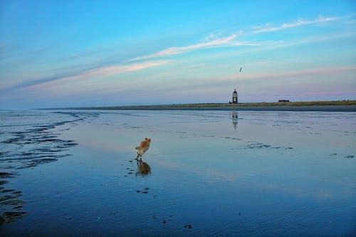 Gratis lagerfoto af hund, solnedgang, strand
