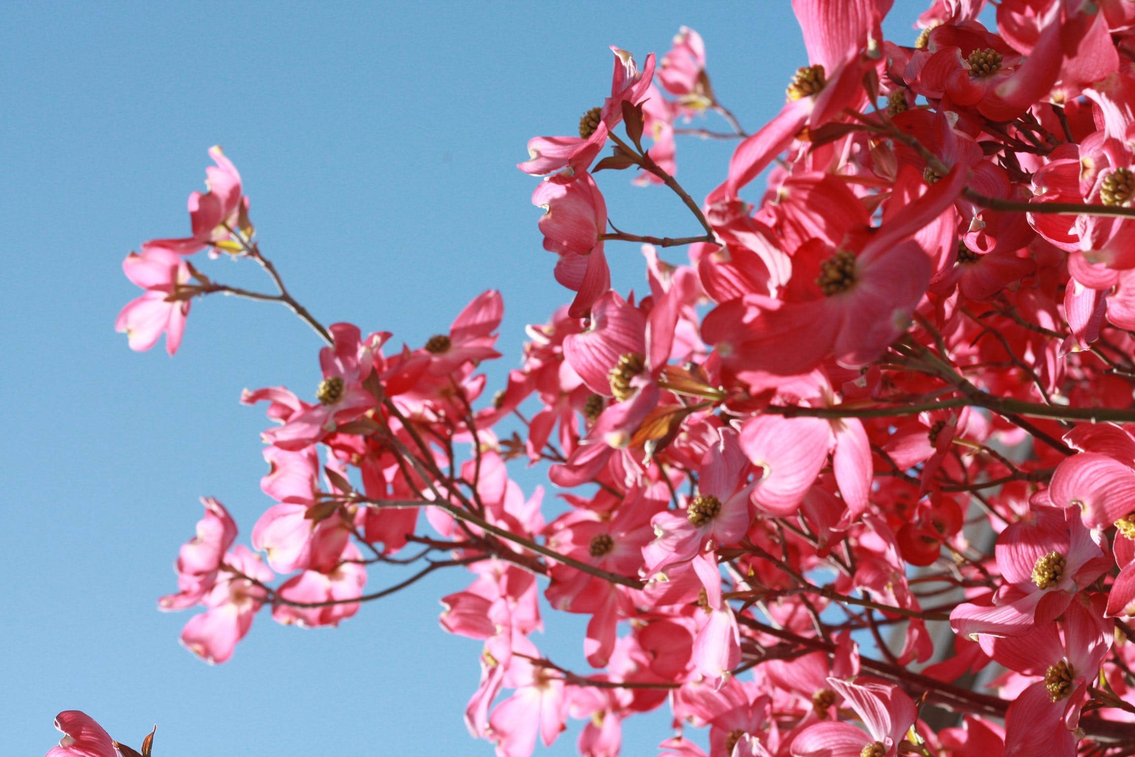Pink Flowers Under Blue Clear Sky