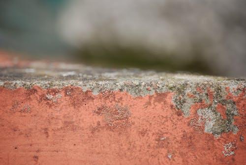 宏觀, 景深, 模糊的背景, 橙子 的 免费素材照片