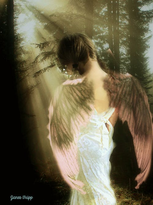 Free stock photo of far-sighted farie, photo-art, wings