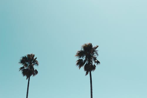 Ảnh lưu trữ miễn phí về ánh sáng ban ngày, bầu trời, cây, cây cọ