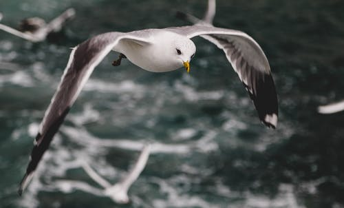 Бесплатное стоковое фото с крупный план, летающий, птица