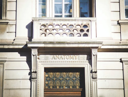 Anatomy Building