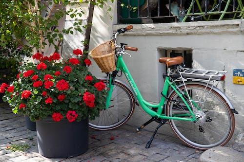 Green City Bike Beside Red Flowers