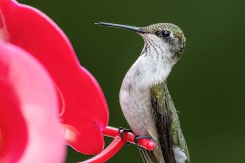 Fotos de stock gratuitas de al aire libre, animal, brillante