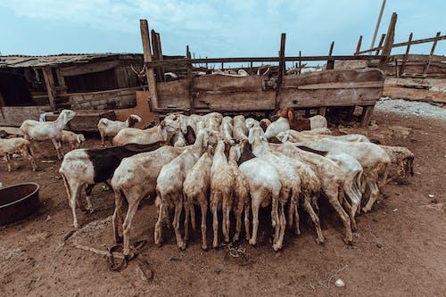Gratis stockfoto met achtergelaten, beest, boerderij