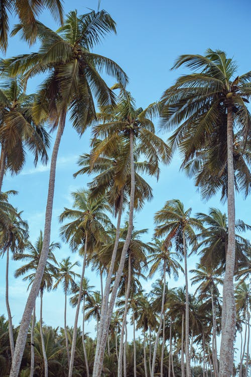 Gratis stockfoto met eiland, exotisch, h2o