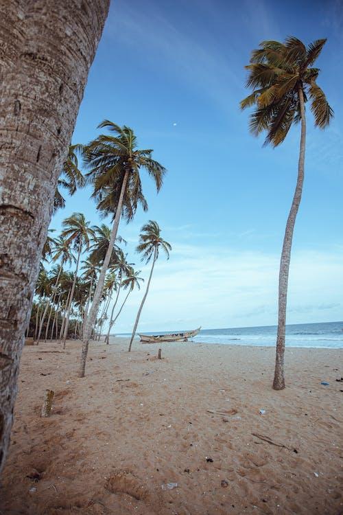 Gratis stockfoto met boom, eiland, exotisch