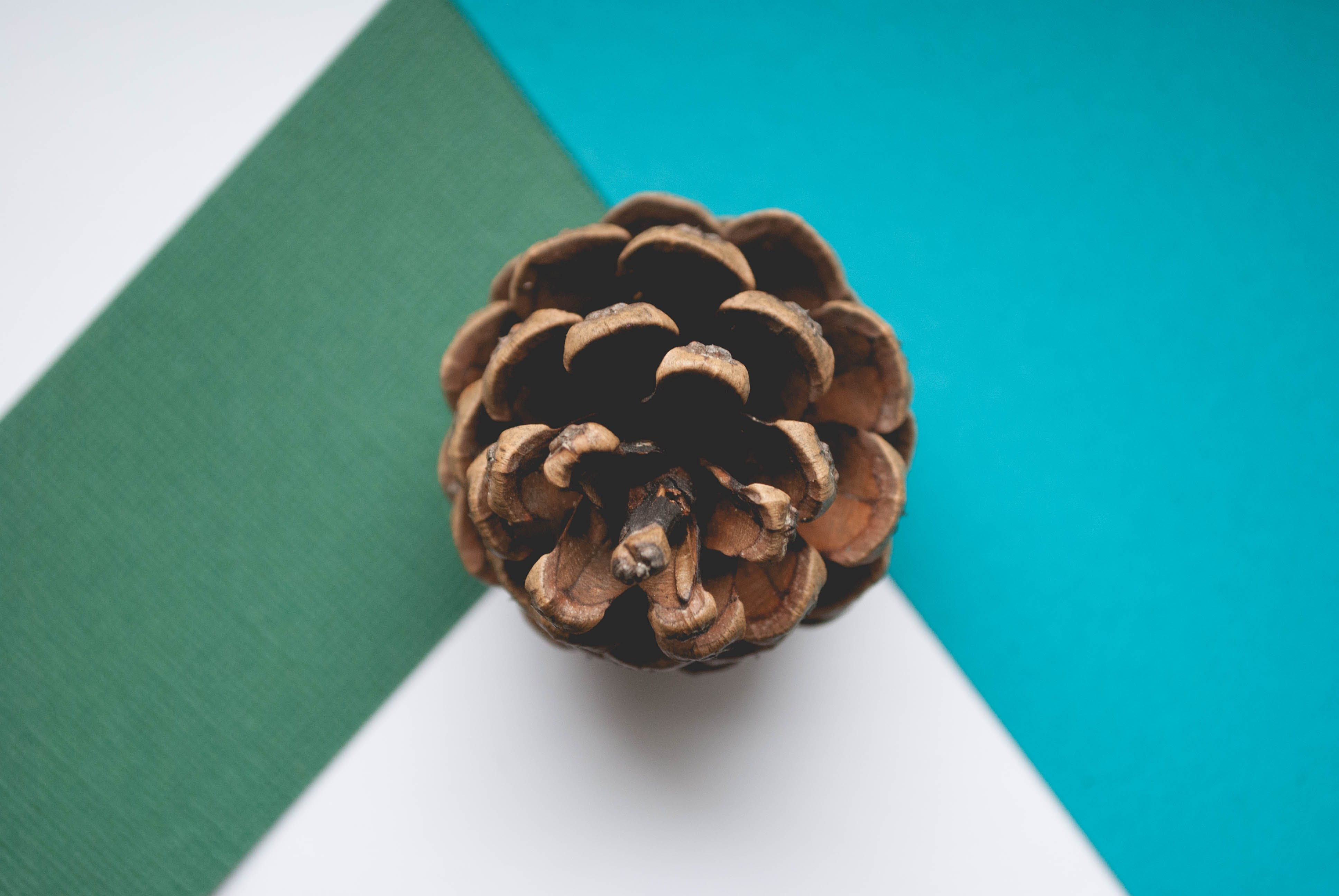 Brown Pinecone Close-up