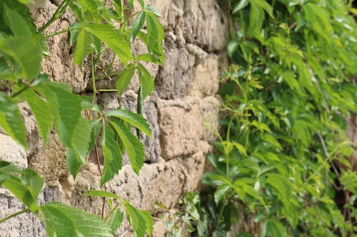 Free stock photo of brick, green, plants