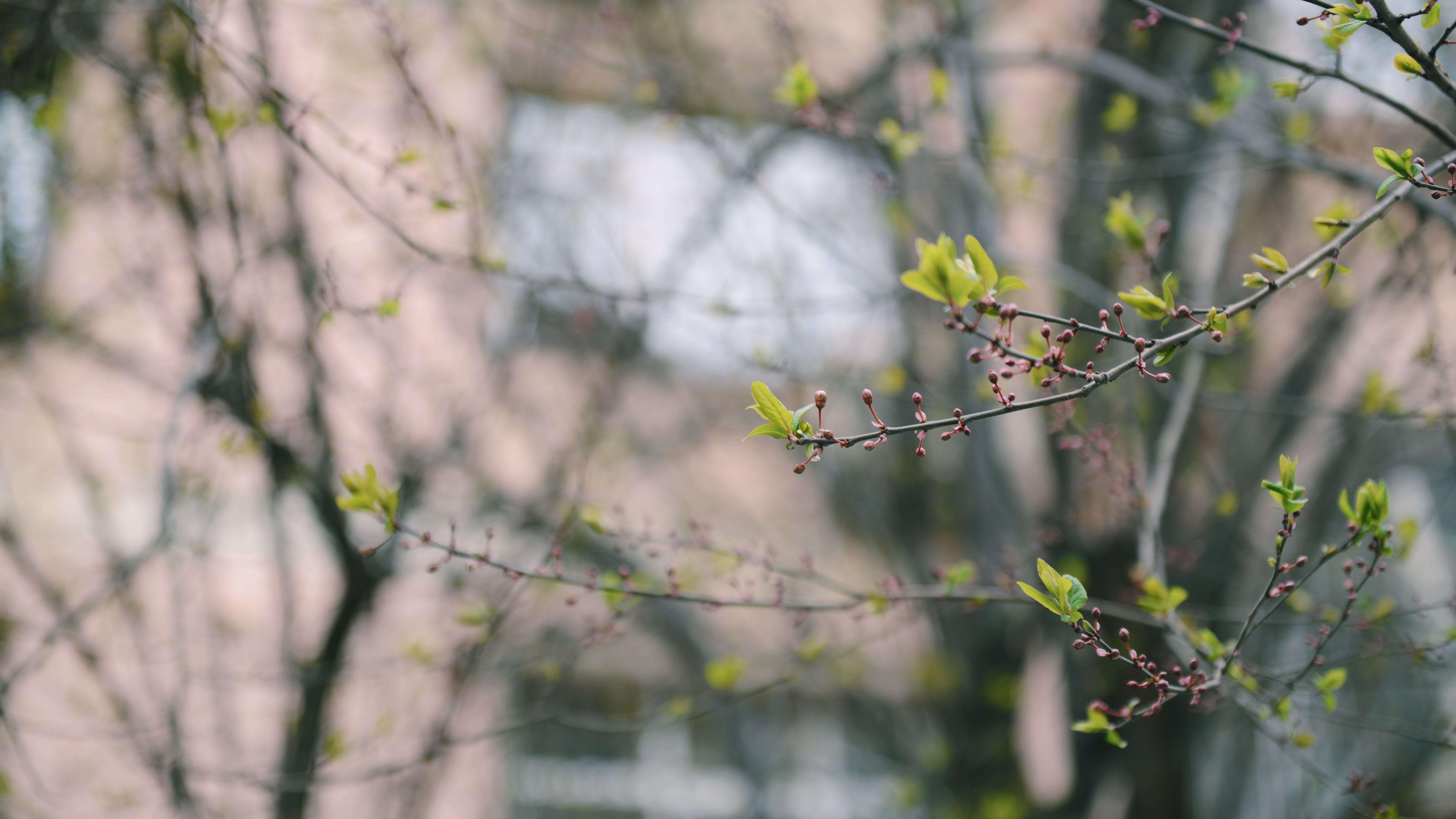 Selective Focus Photography of Green Leaf Plant With Purple Buds