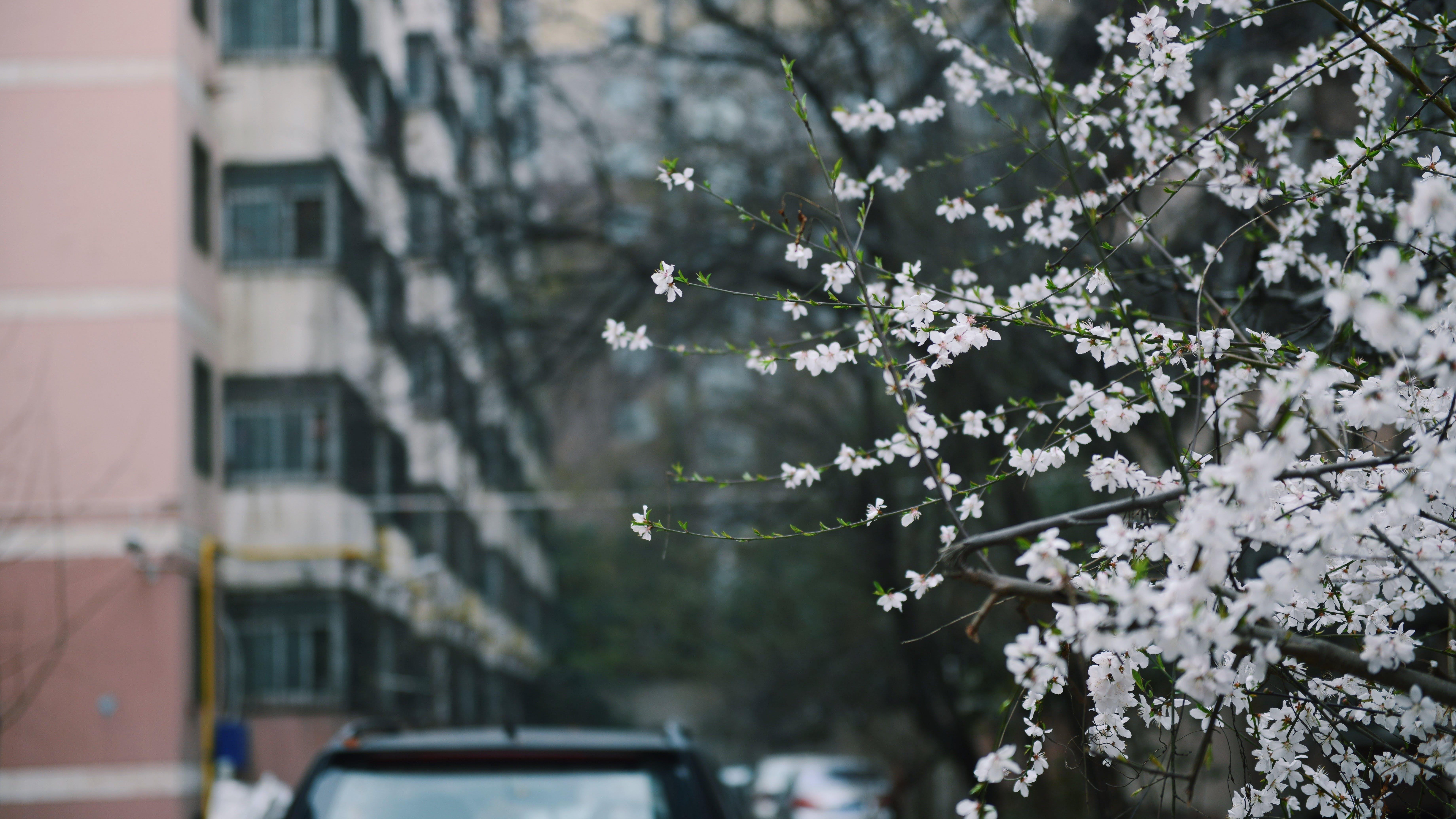 Depth of Photo of White Petaled Flowers