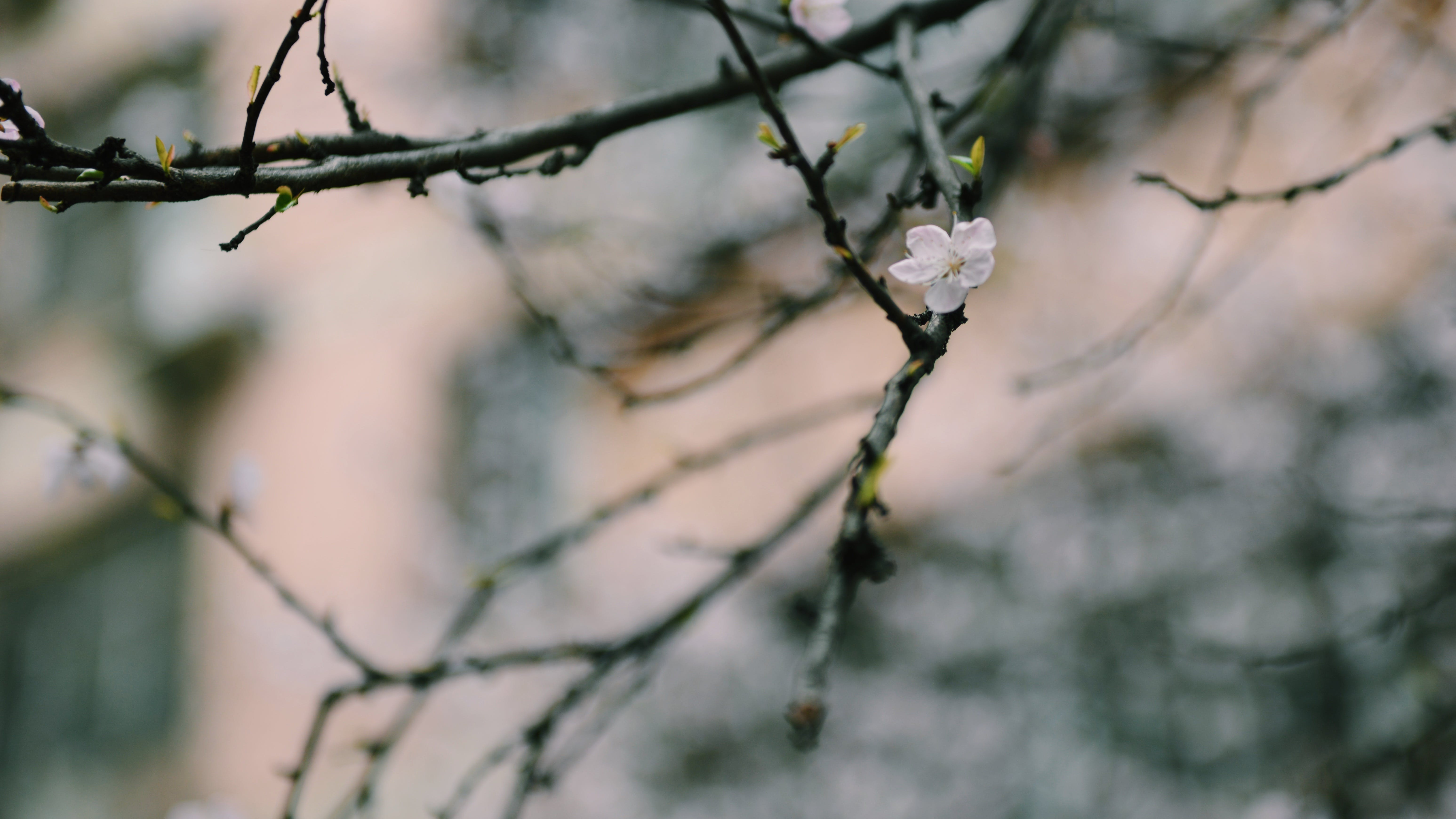 White Petaled Flower on Black Branch
