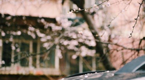 Foto d'estoc gratuïta de a l'aire lliure, arbre, bokeh, branques