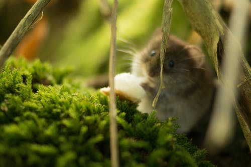 Δωρεάν στοκ φωτογραφιών με mouse, άγρια φύση, ζώο, πανίδα