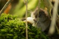 animal, mouse, wildlife