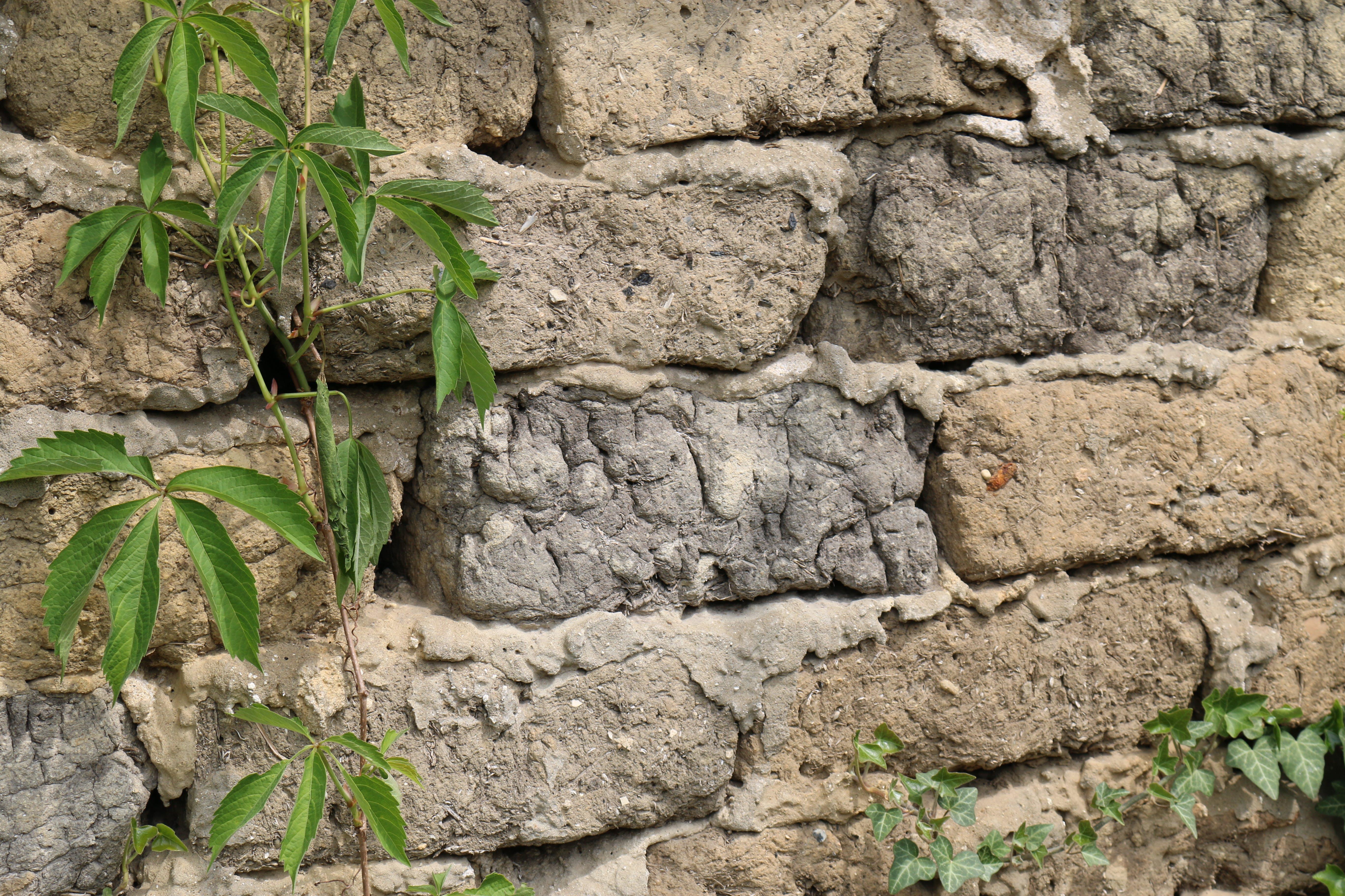 Free stock photo of brick, green, plants, rustic