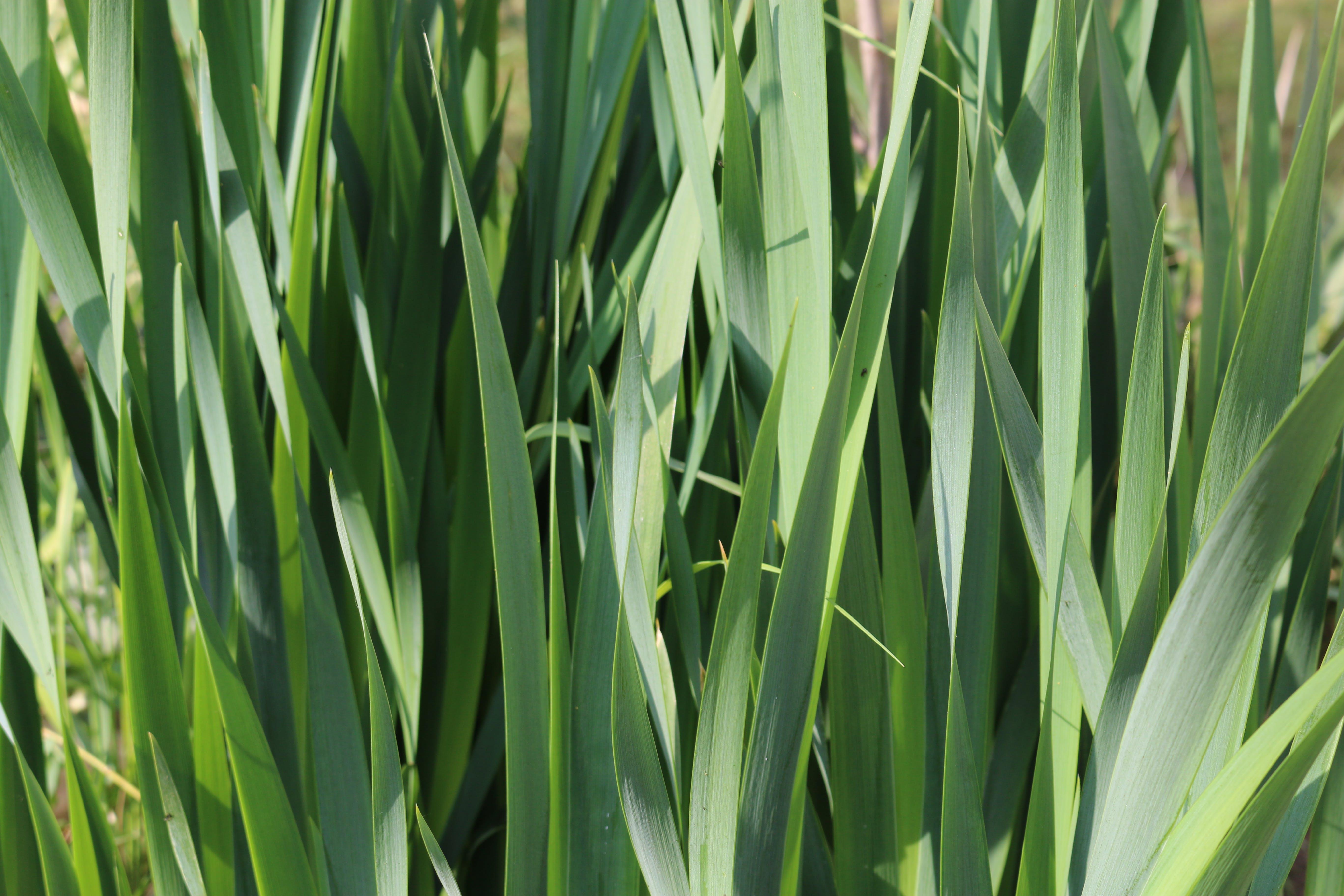 Free stock photo of fu, grass, green, nature