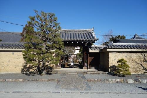 Foto d'estoc gratuïta de arbre, cultura japonesa, Japó, Japonès