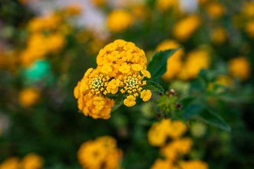 Immagine gratuita di estate, fiori, fiori gialli