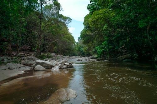 açık hava, ağaçlar, akarsu, akış içeren Ücretsiz stok fotoğraf