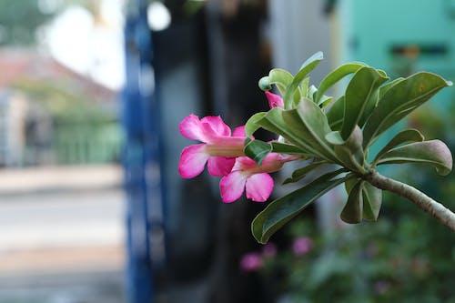 Foto stok gratis 6d, alam, bunga, canon