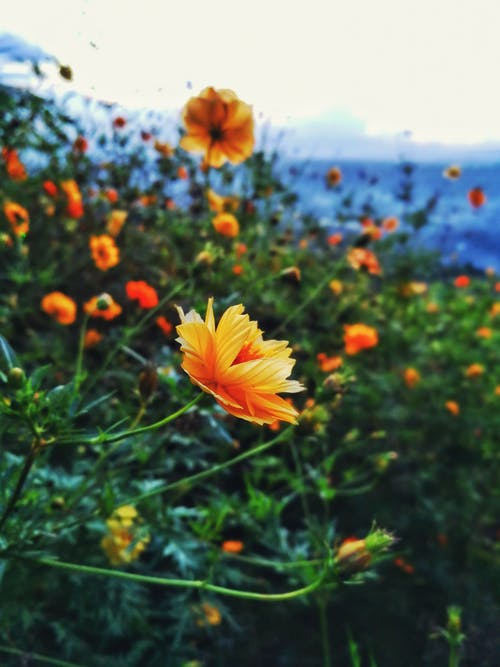 Selective Focus Photography of Orange Petaled Flowers