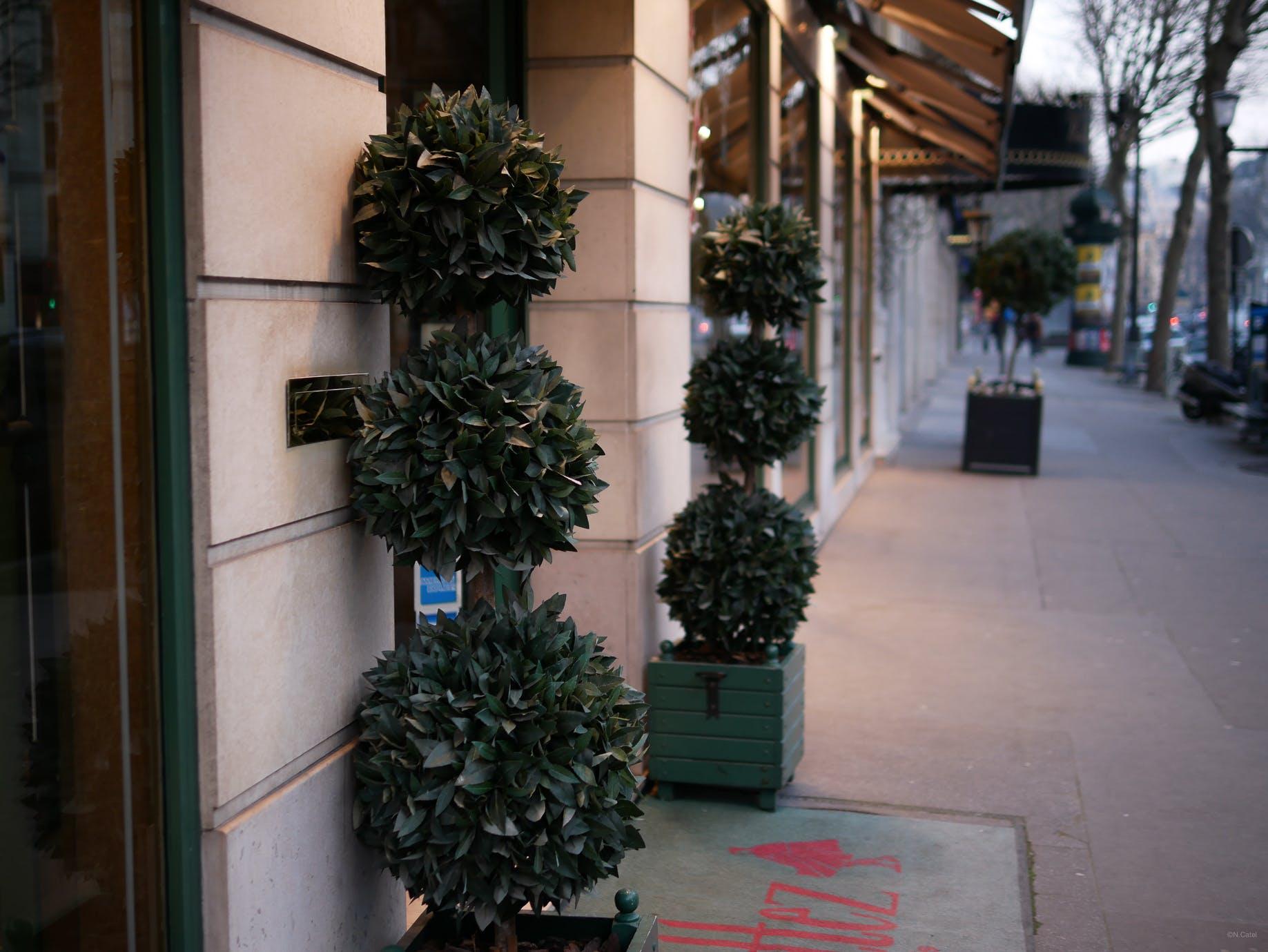 Free stock photo of arbre, boutique, commerce, door