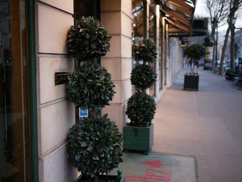 คลังภาพถ่ายฟรี ของ arbre, plantes, va ©© ga ตาล, ต้นไม้