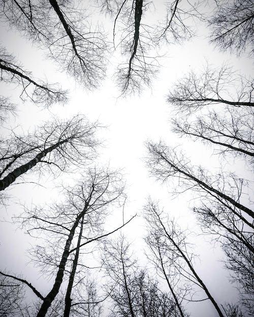 Imagine de stoc gratuită din alb-negru, anotimp, arbori, codru