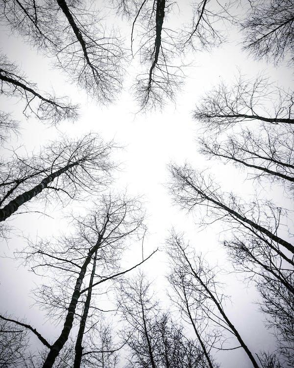 Leafless Trees Under White Sky