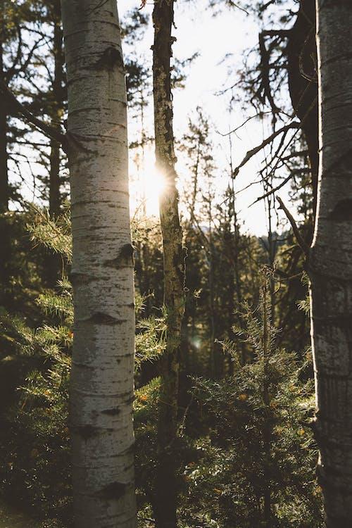 ağaç gövdesi, ağaç kabuğu, ağaçlar, ahşap içeren Ücretsiz stok fotoğraf