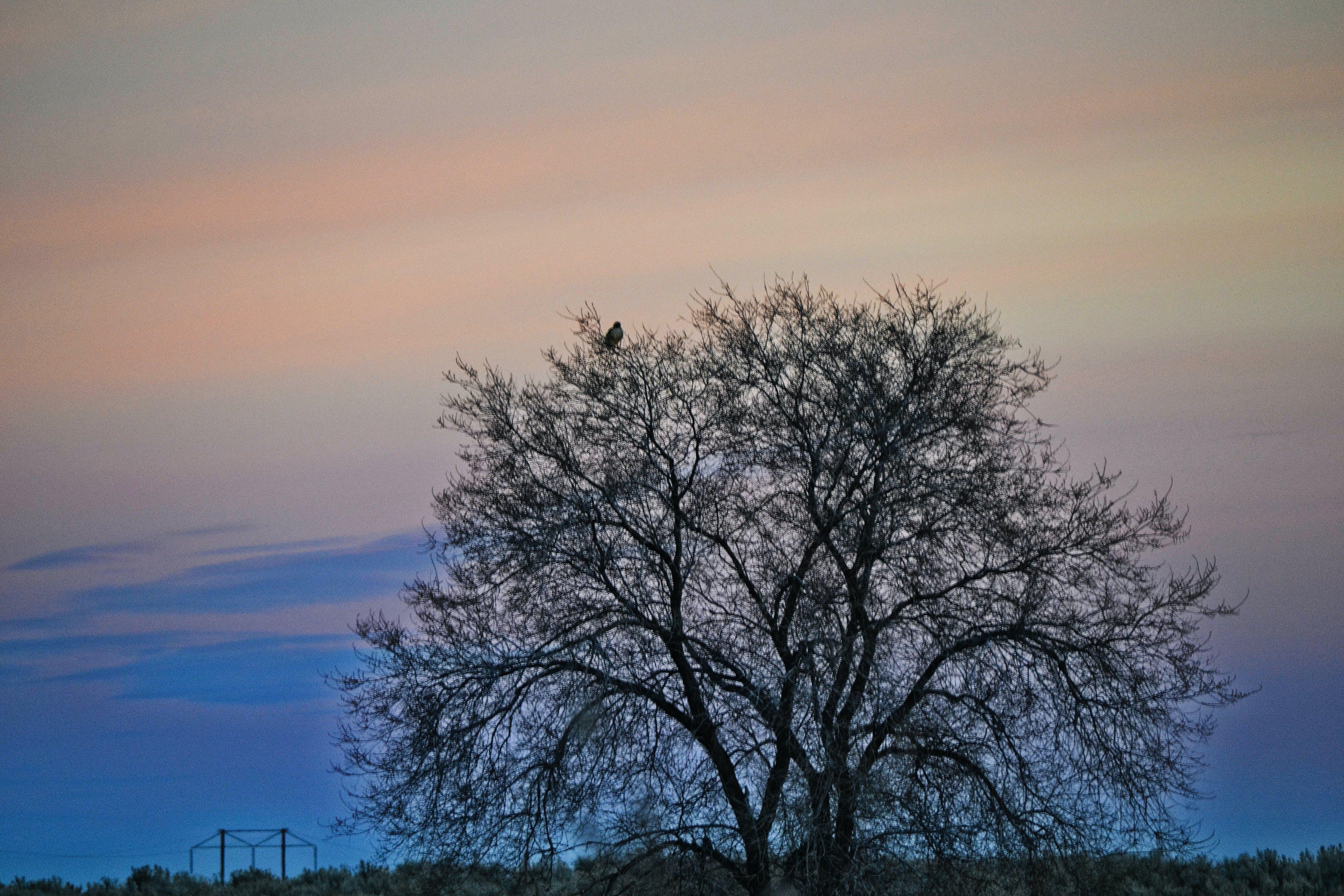 Foto stok gratis alam, awan, backlit, cuaca