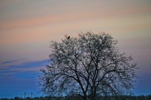 Ảnh lưu trữ miễn phí về bầu trời, bình minh, bóng, chim