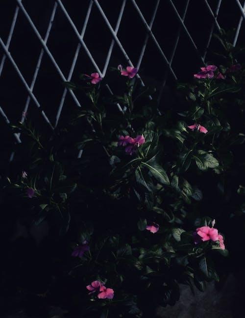Free stock photo of beautiful flowers, dark green, dark green leaves