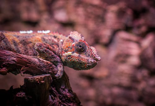 Shallow Focus Photography Of Multi-Colored Lizard