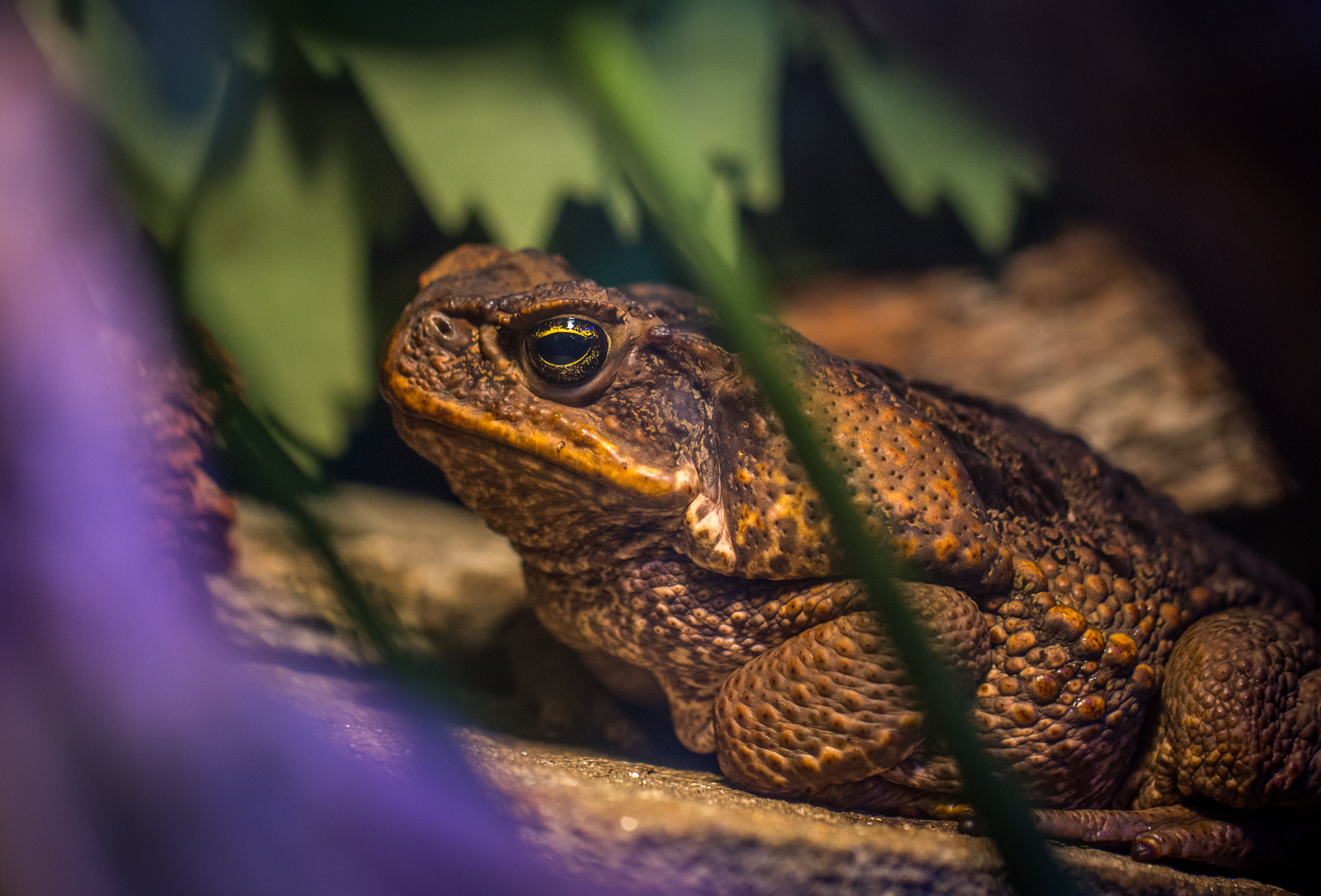 Shallow Focus Photography of Frog