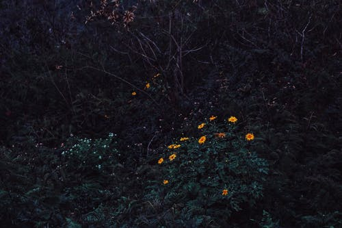 Free stock photo of beautiful flower, dark background, dark green