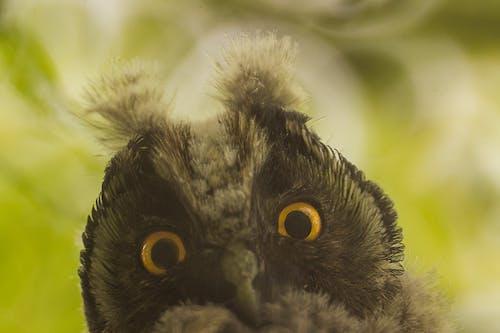 คลังภาพถ่ายฟรี ของ ตลก, นกล่าเหยื่อ, นกฮูก, พรรณสัตว์