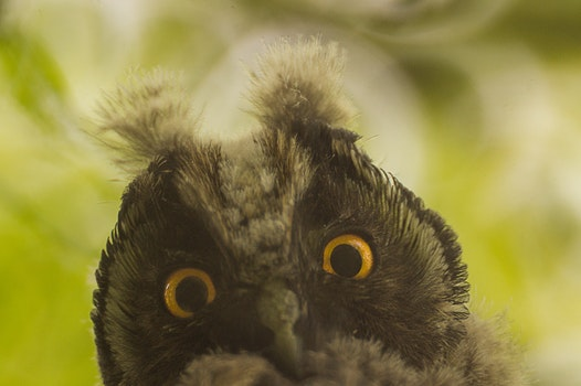 Free stock photo of bird, animal, owl, funny