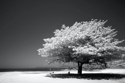 Imagine de stoc gratuită din alb, apă, arbore, Cer întunecat