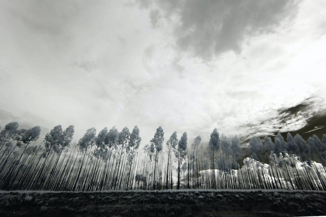 белый, буря, деревья