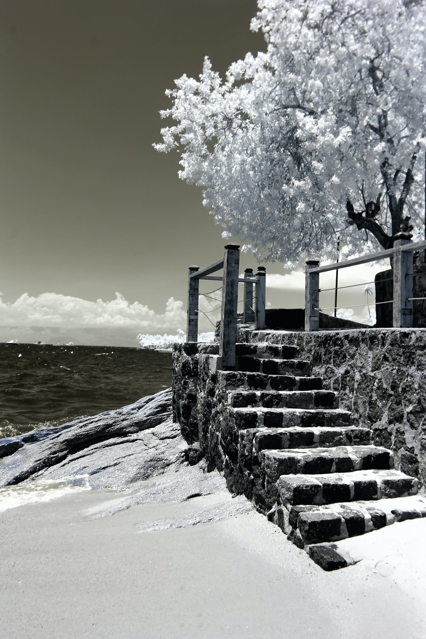 Photo of Trees and Stairs Near Ocean