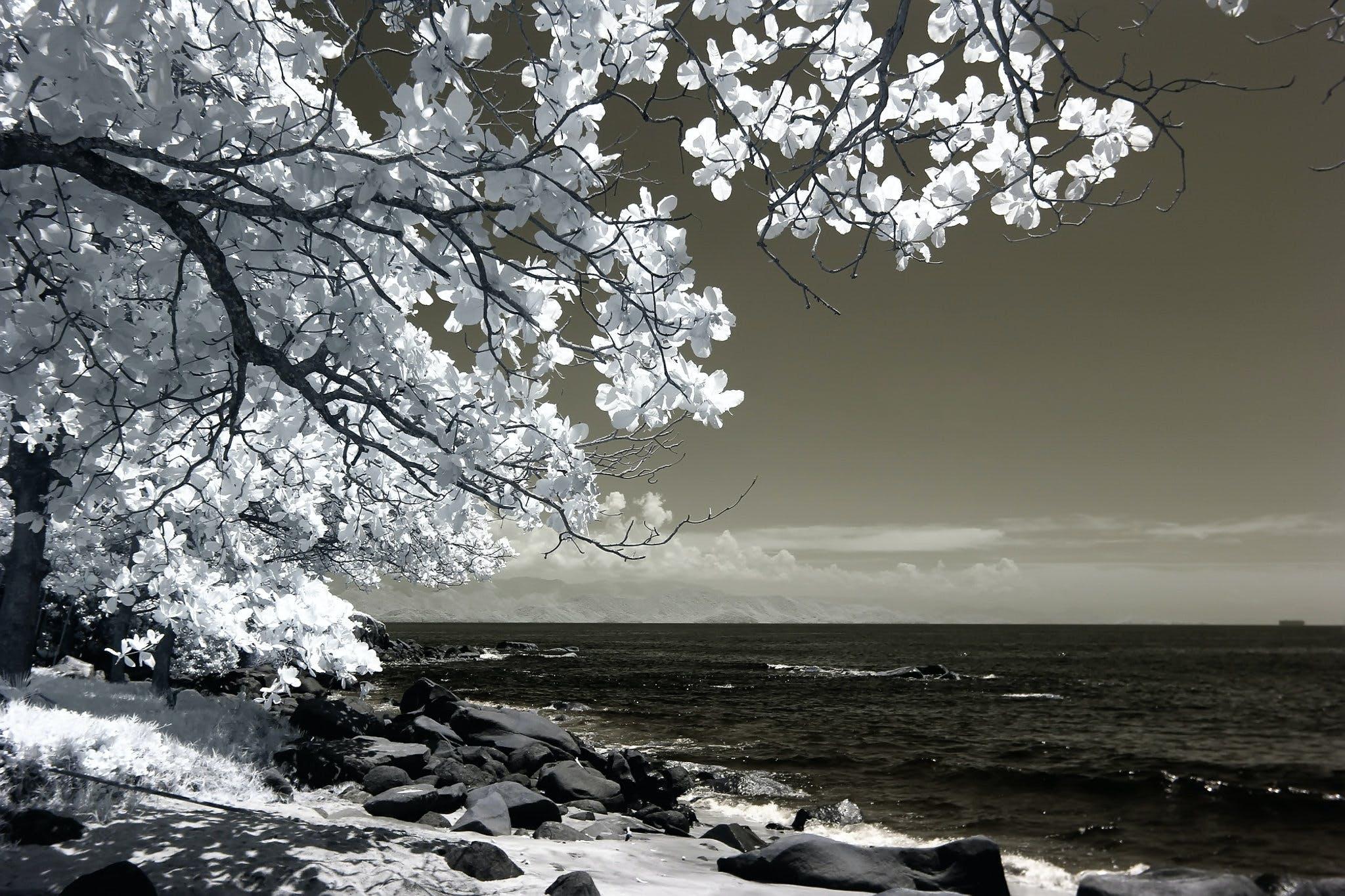 White Tree Beside Seashore Photo
