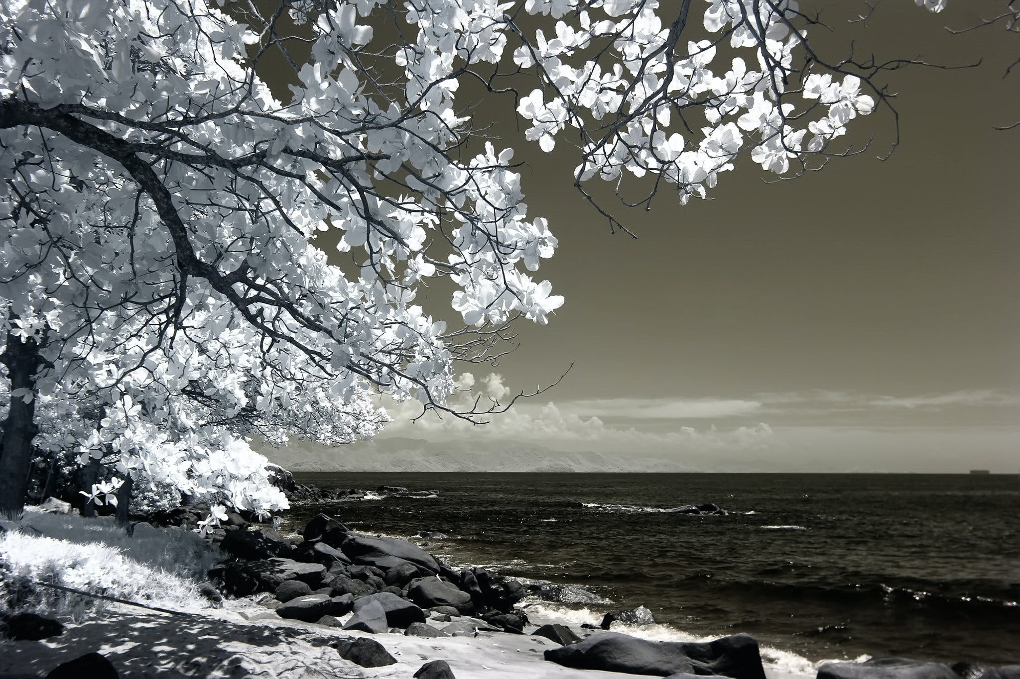 White Tree Beside Seashore Photo