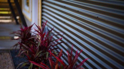 Foto stok gratis baris, Desain, merapatkan, penuh warna