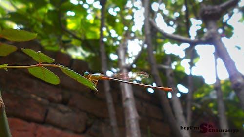 Gratis arkivbilde med anamalia, blå insekt, dragonfly vinge, fargerik