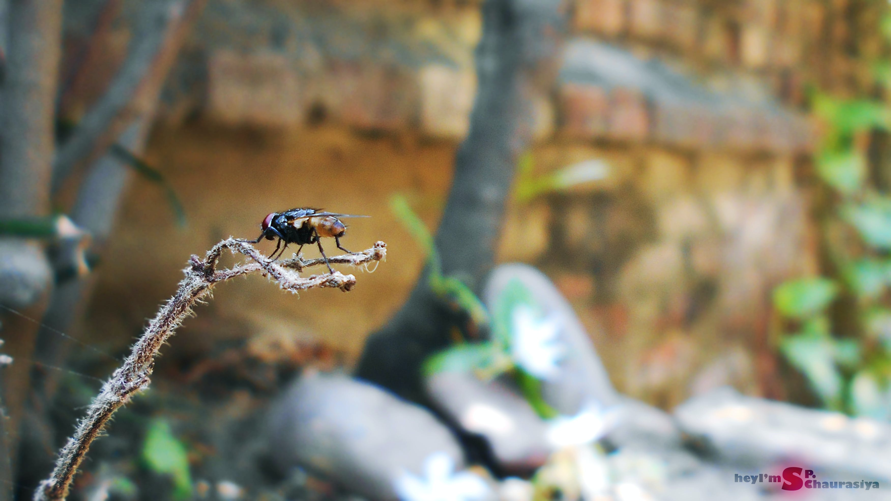 Free stock photo of background blur, garden, house fly, insect