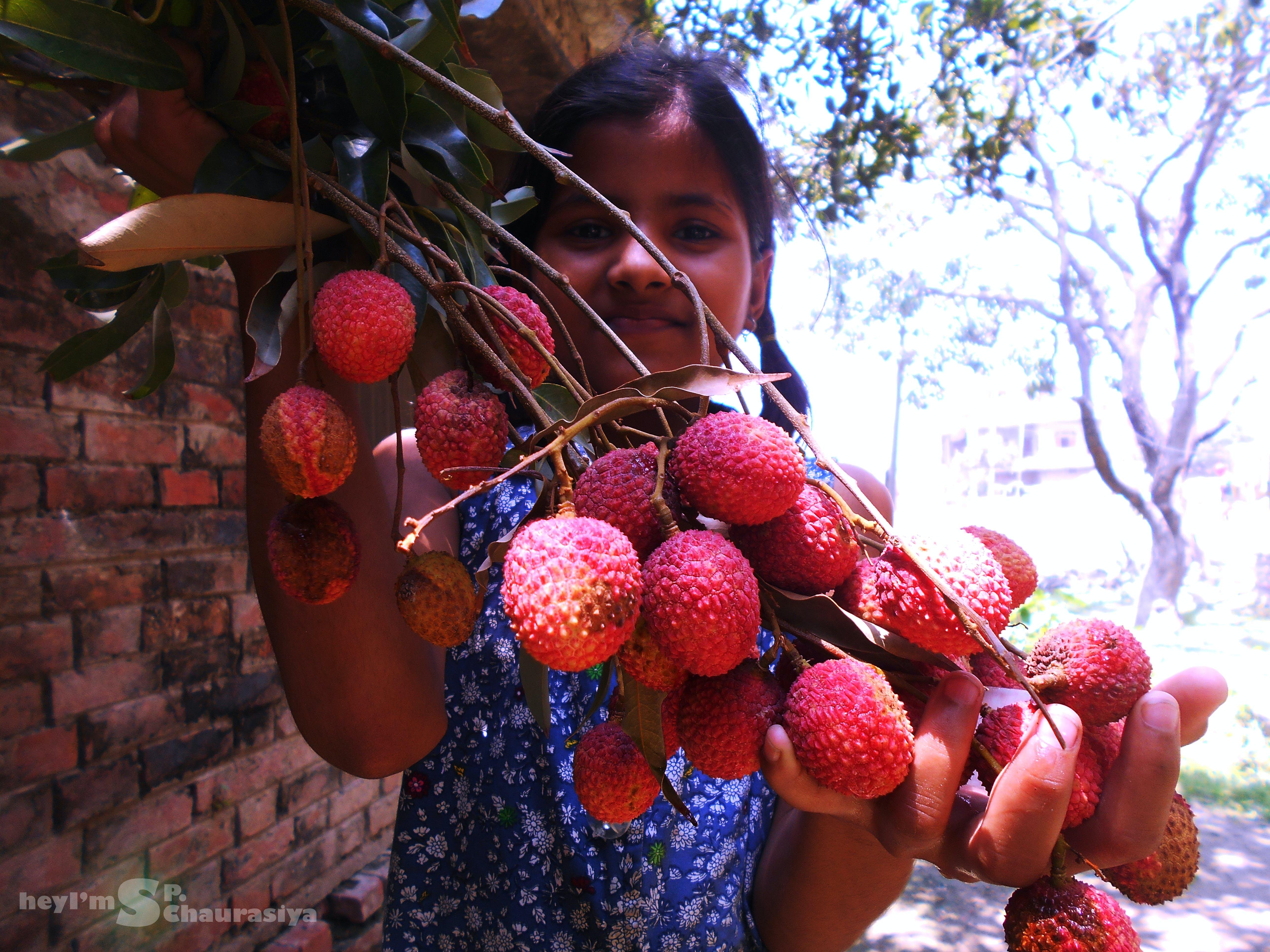 Free stock photo of child, farm, farm field, fresh