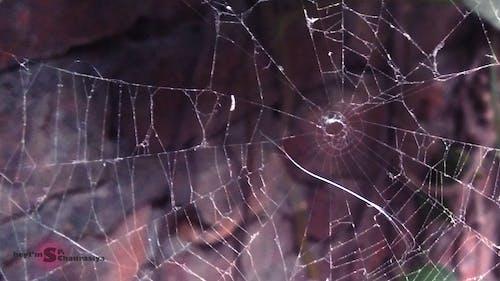 Gratis arkivbilde med blå, dråper, edderkopp, edderkoppenett